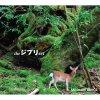 Mimio Sumaseba: Take Me Home Country Roads (feat. Arvin Homa Aya)