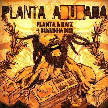 Testi Planta Adubada