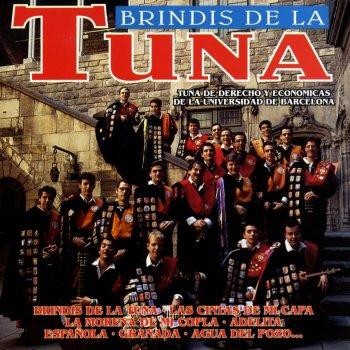 Testi Brindis de la Tuna