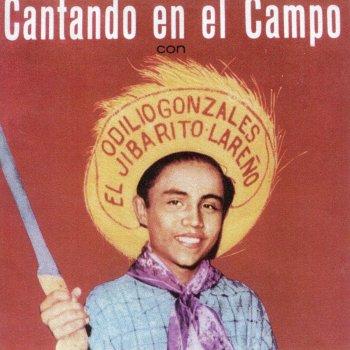 Saludo a Lares (Mapeyé) (Testo) - Odilio Gonzalez - MTV