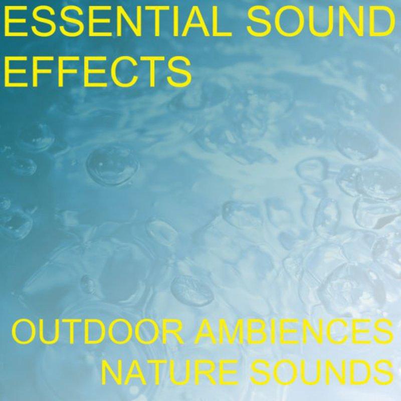 kuumia tuotteita hienoja tarjouksia 2017 ostaa nyt Essential Sound Effects - Tree Branch Wood Crack Cracking ...