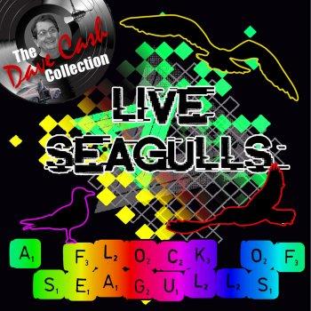 Testi Live Seagulls