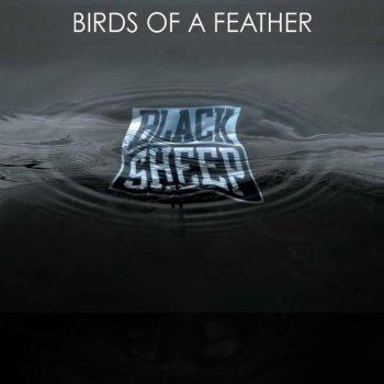 Testi Birds of a Feather