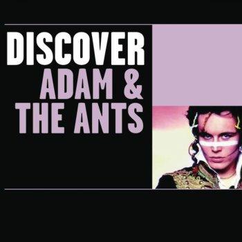 Testi Discover Adam & The Ants