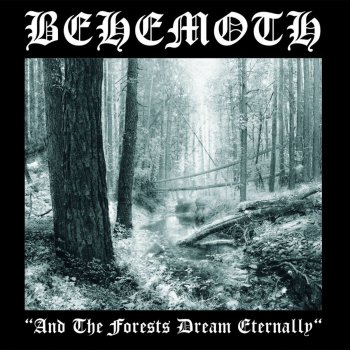 Testi And the Forest Dream Eternally