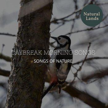 Testi Daybreak Morning Songs - Songs of Nature