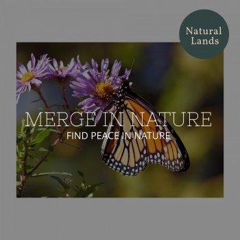 Testi Merge in Nature - Find Peace in Nature