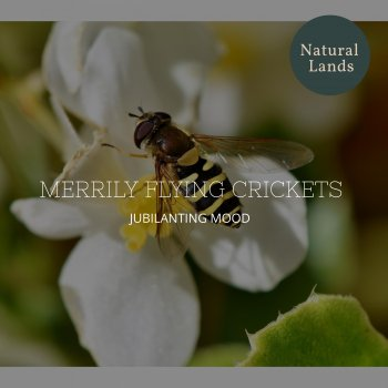 Testi Merrily Flying Crickets - Jubilanting Mood