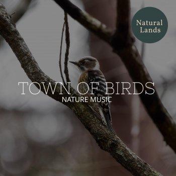 Testi Town of Birds - Nature Music