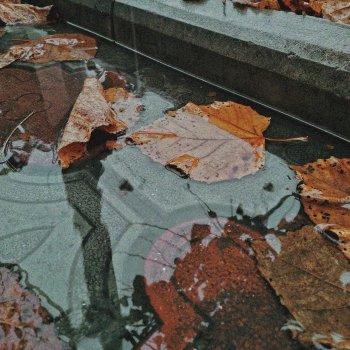 Testi Fall Leaf