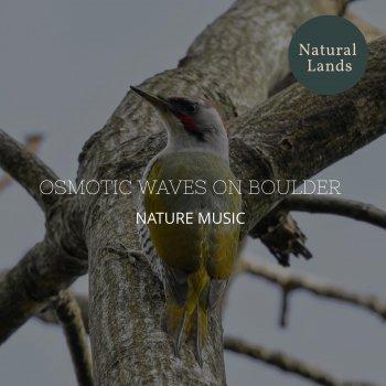 Testi Osmotic Waves on Boulder - Nature Music