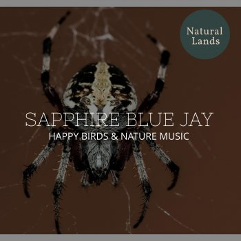 Testi Sapphire Blue Jay - Happy Birds & Nature Music