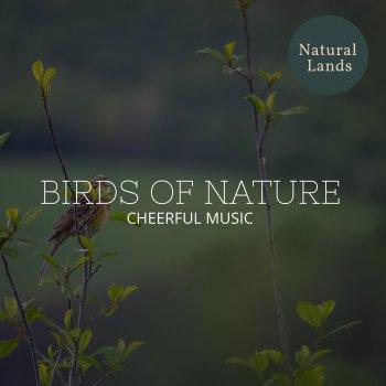 Testi Birds of Nature - Cheerful Music