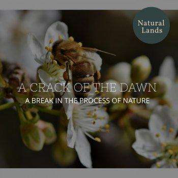 Testi A Crack of the Dawn - A break in the Process of Nature