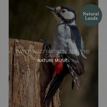 Testi Twittering Birdsongs in the Dawn - Nature Music