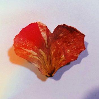 Testi Wild Heart