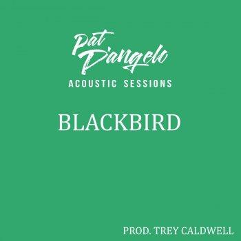 Testi Blackbird