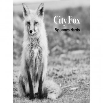 City Fox - cover art