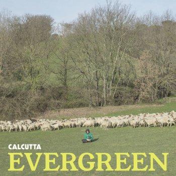 Testi Evergreen