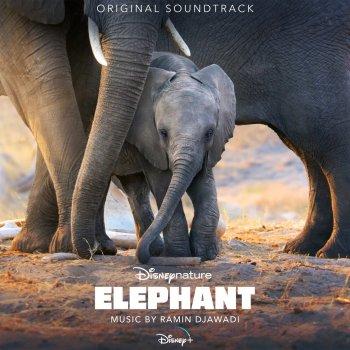 Testi Elephant (Original Soundtrack)