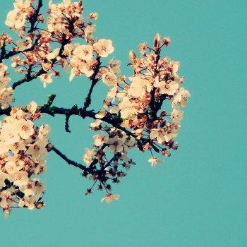 Testi Magnolia