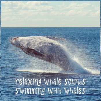 Testi Relaxing Whale Sounds - Swimming with Whales