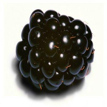 Testi Blacker the Berry