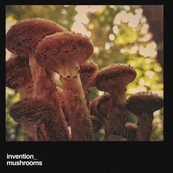 Testi Mushrooms
