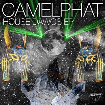 Testi House Dawgs