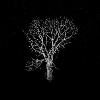 Testi Bloom Innocent - Acoustic