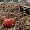 Colony Collapse (with Nova)