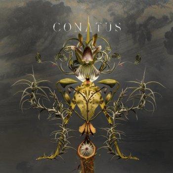 Testi Conatus
