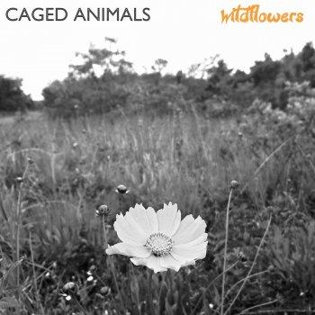 Testi Wildflowers