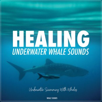 Testi Healing Underwater Whale Sounds - Swimming with Whales (Ambient Soundscape)
