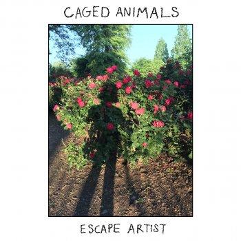 Testi Escape Artist