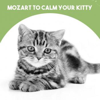 Testi Mozart to calm your Kitty