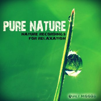 Testi Pure Nature (Nature Recordings for Relaxation)
