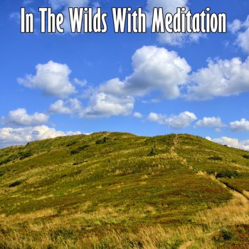 Testi In The Wilds With Meditation