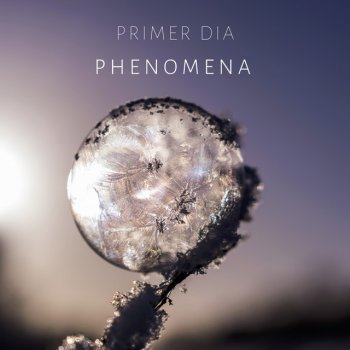 Testi Phenomena - Single