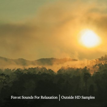 Testi Forest Sounds For Relaxation