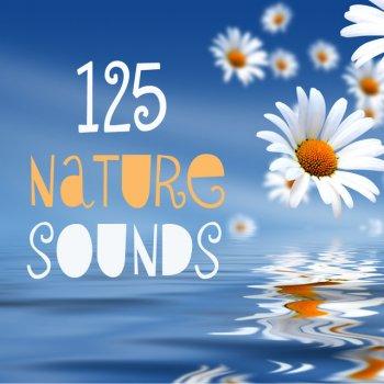 Bird Sounds - Free Birds Singing Relaxing Spa Music Bird Sounds