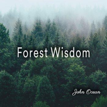 Testi Forest Wisdom - EP