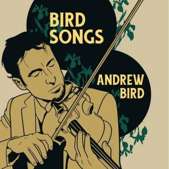 Testi Bird Songs