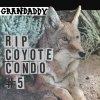 RIP Coyote Condo #5